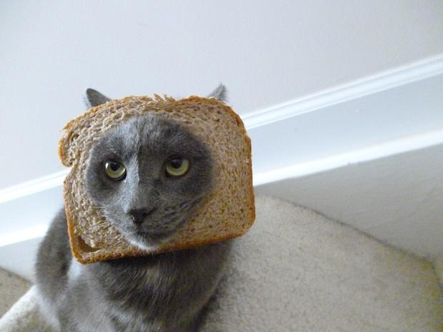 Breaded Cat Meme