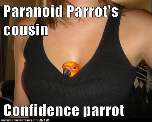 confidence parrot
