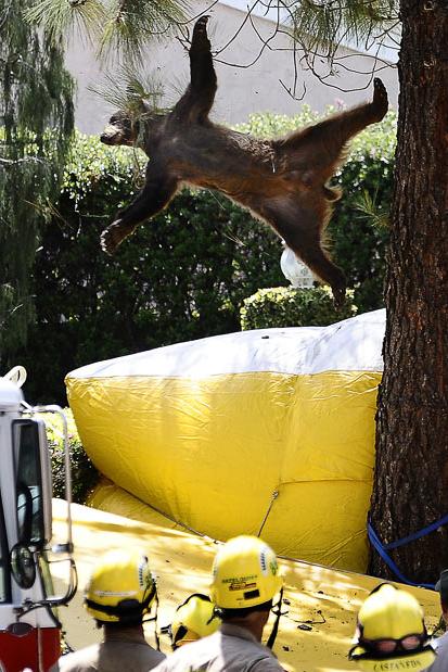 Los Angeles Bear Falls May 27th, 2010