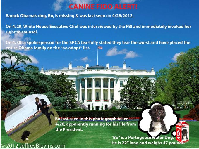 Bo, Obama's Dog, Is Missing