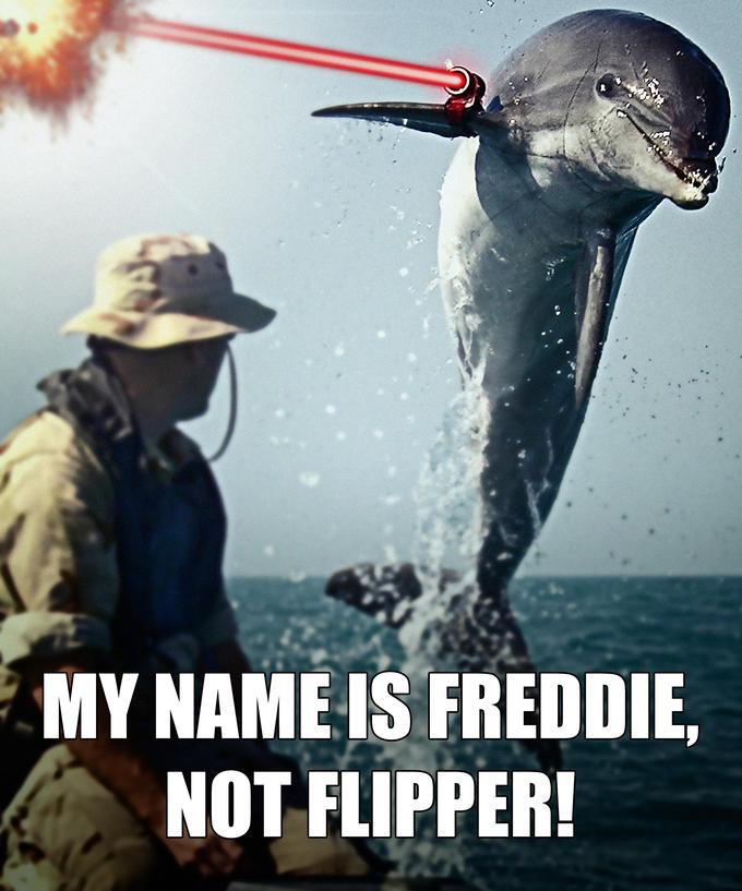 Bullied Dolphin