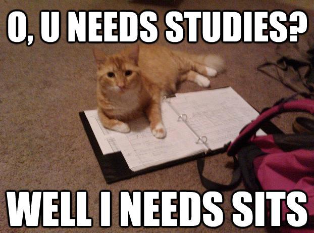 Study? Sits.