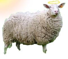ANGEL SHEEP