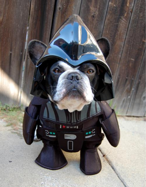 Dog Cosplays Darth Vader