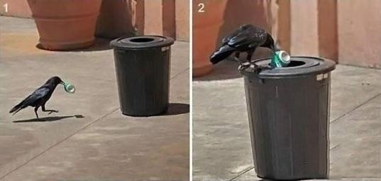 Recycling Bird