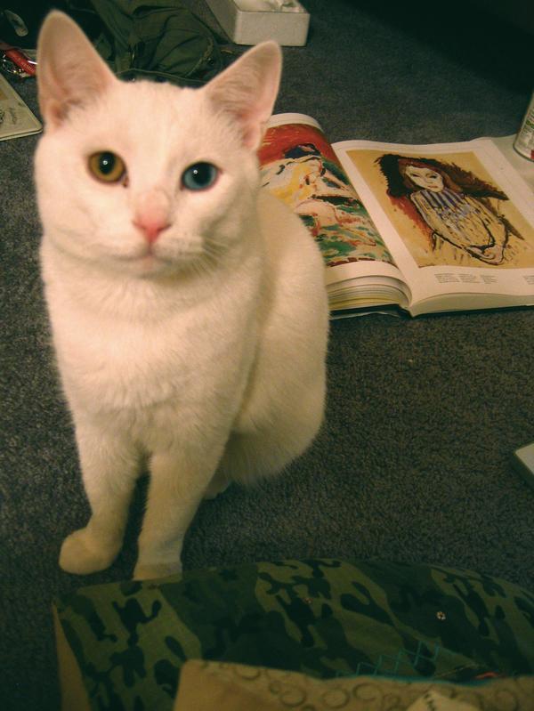 DESU CAT