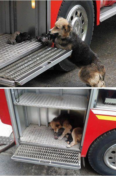 Dog saves puppies from burning house