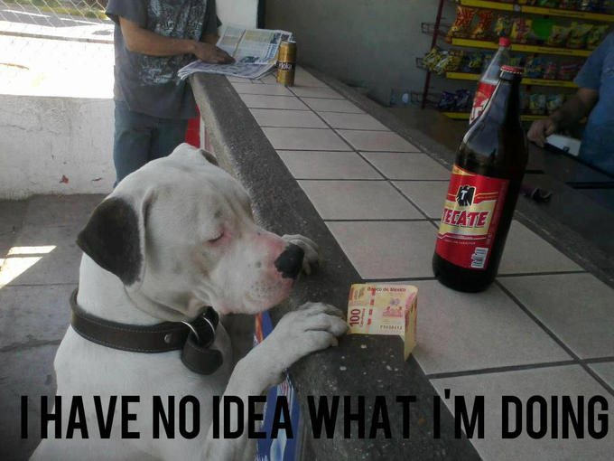Dog and beer