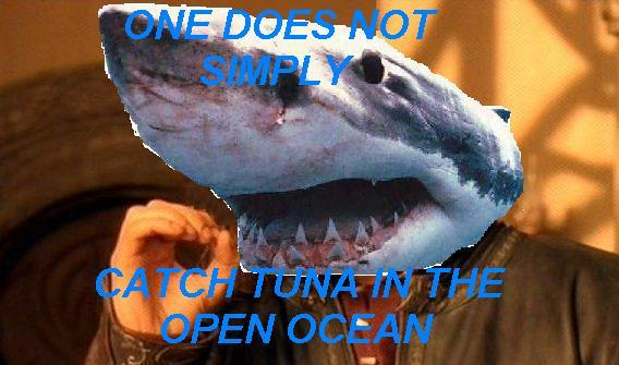 Things I learned from Shark Week