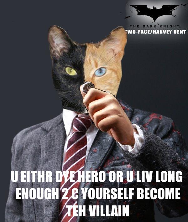 Harvey Dent Cat
