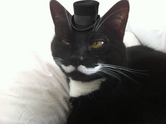 Posh Mustache Cat
