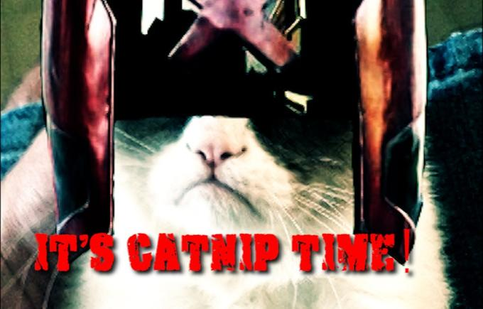 It´s catnip time