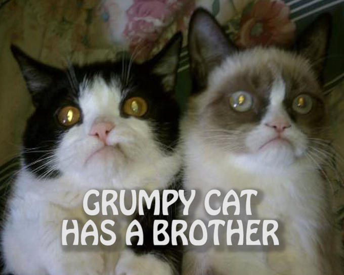 GRUMPY CAT HAS A BROTHER