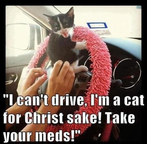 Kitten Can't Drive