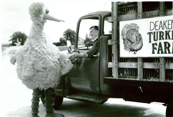 Don't get in the truck, Big Bird! Nooooooooooooooooooooo!