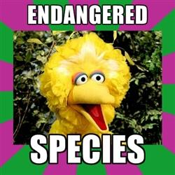 Big Bird Endangered Species