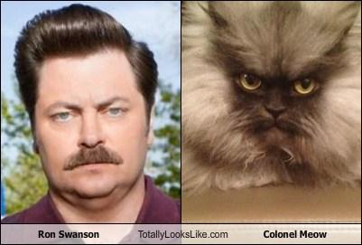 Nick Offerman (Ron Swanson) Totally Looks Like Colonel Meow
