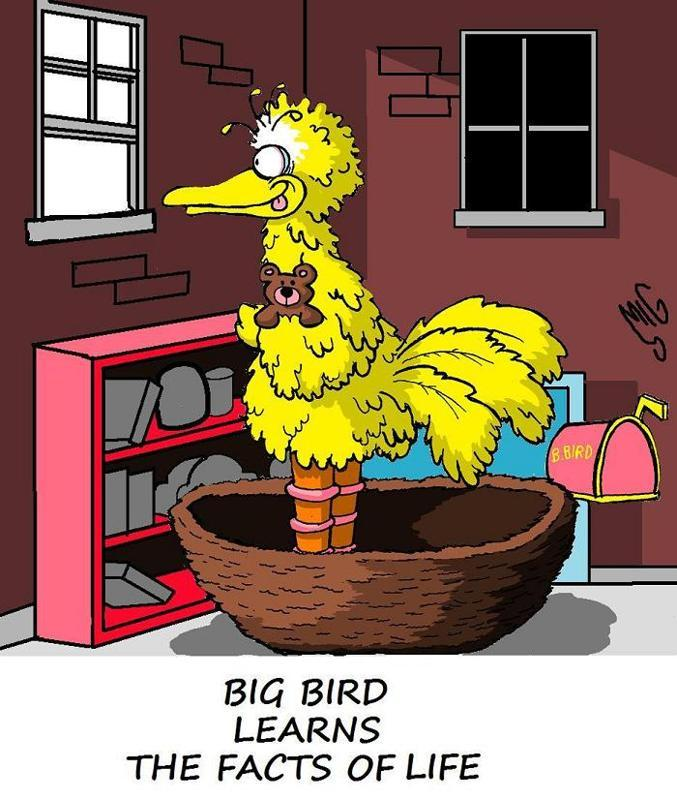 Big Bird Learns the Facts of Life