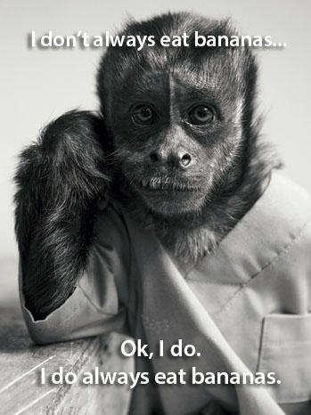 The Most Interesting Monkey in the World