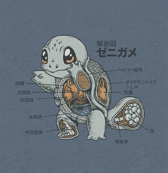 Anatomy of Squirtle