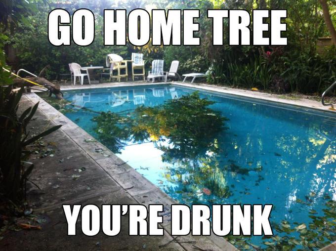 Drunk Tree