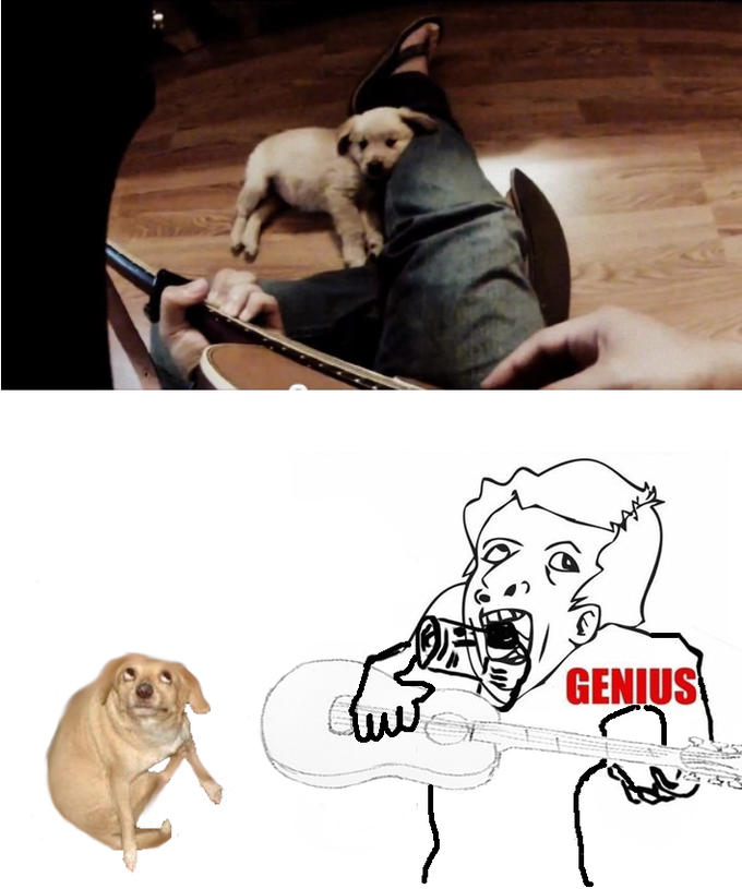 guitar playing puppy genius