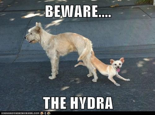 BEWARE THE HYDRA!