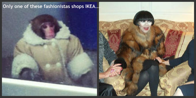 IKEA Monkey Fashionista