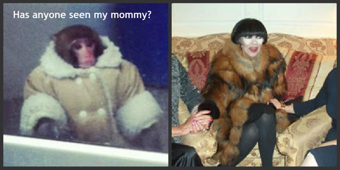 IKEA Monkey Looking for Mommy