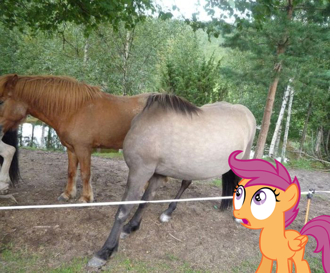 Headless horse is REAL!!!