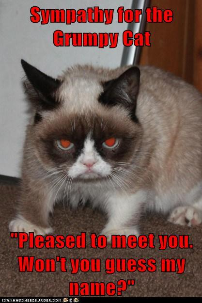 Sympathy For the Grumpy Cat