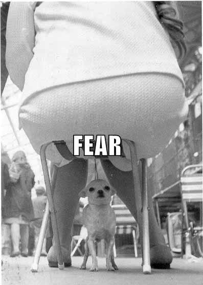 Every Dog's Face of Fear
