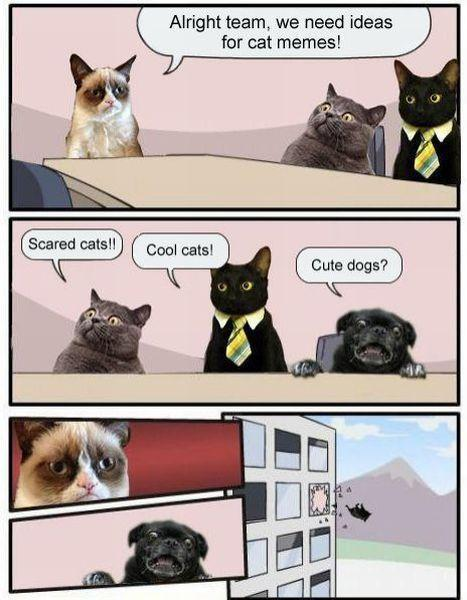 Boardroom Suggestion - Cat Memes