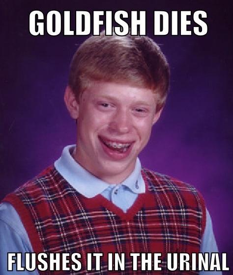 Goldfish Dies