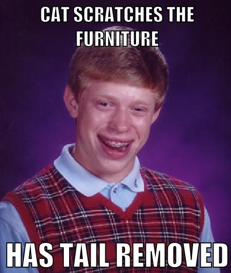 Cat Scratches Furniture