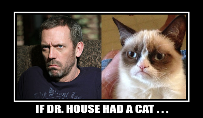If House had a cat.