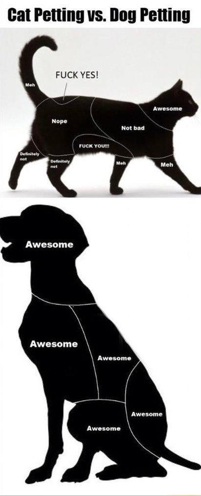 where  to pet a pet