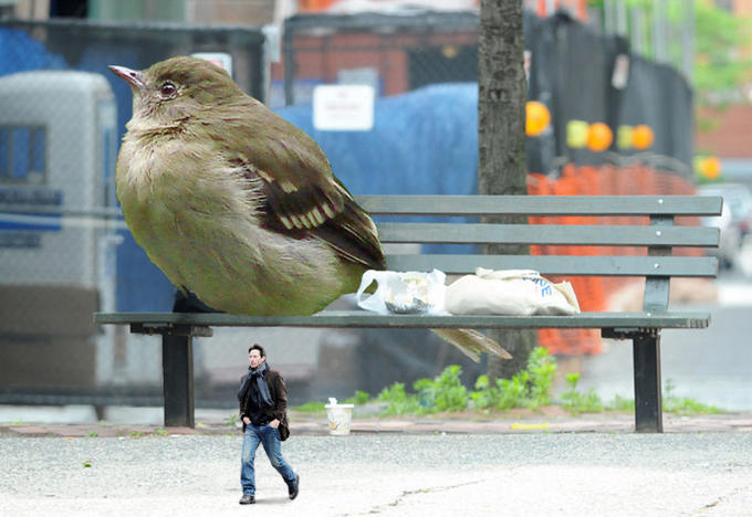 Keanu bird depressed
