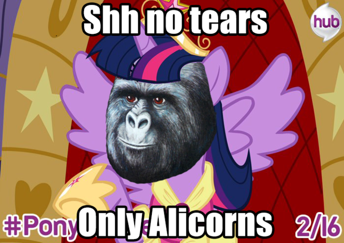 Shh no Tears Only Alicorns