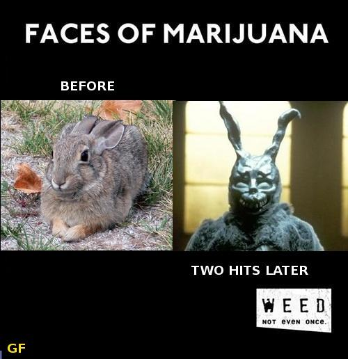 Faces of Marijuana--Rabbits Edition