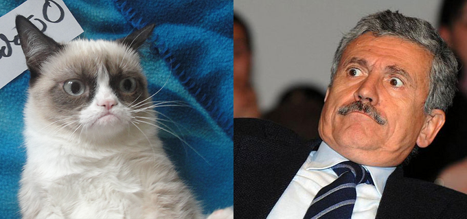 Grumpy Cat vs Massimo