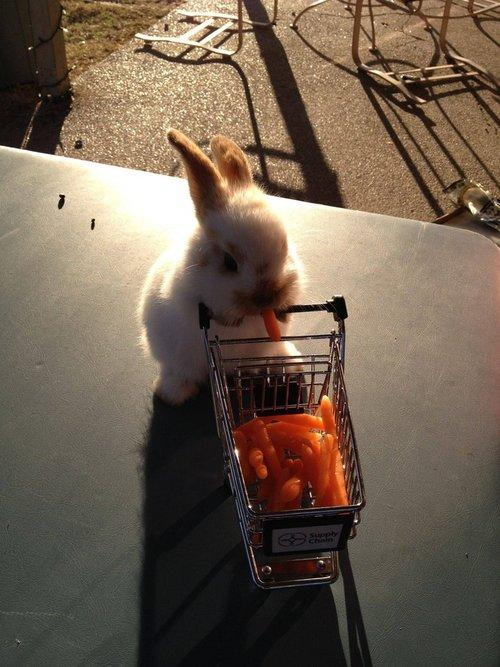I want a mini shopping cart now!