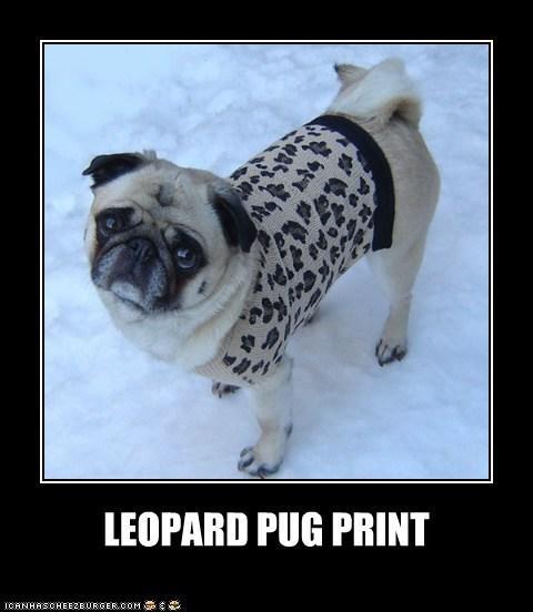 Leopard Pug Print