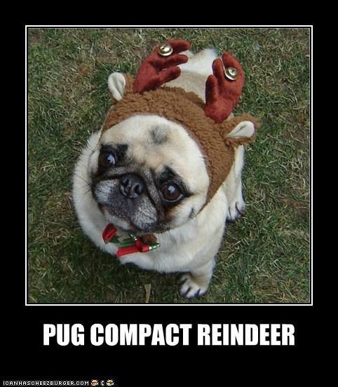 Pug Compact Reindeer