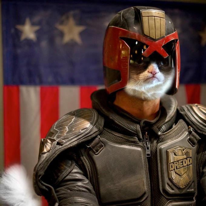 grumpy cat is the law