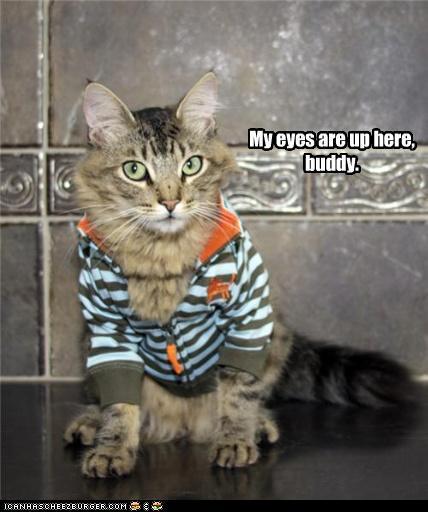 Cat Wearing Shirt