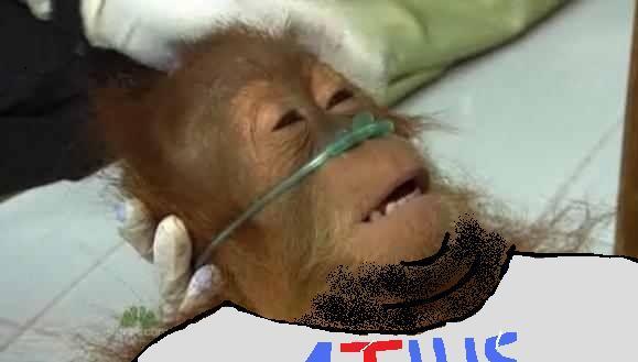 Ill Monkey As a Atlus Gamer