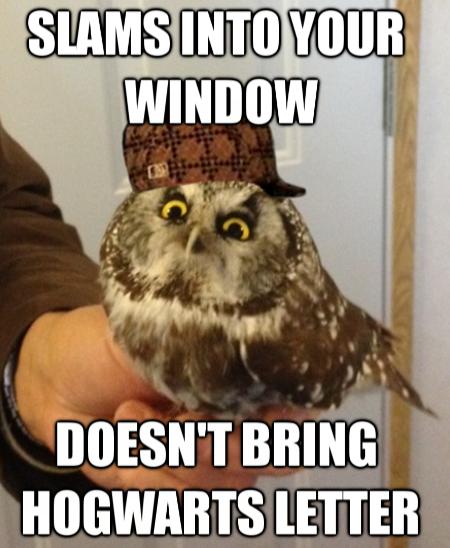 Scumbag Owl