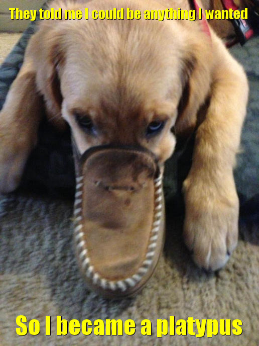 They told me I could be anything I wanted. So I became a platypus.