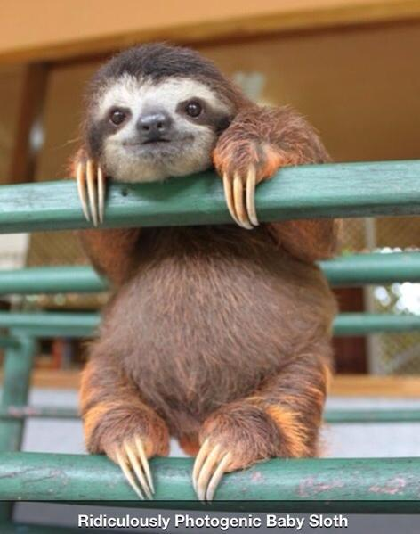 Rape Sloth: The Early Years